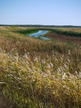 Oak Hammock Marsh